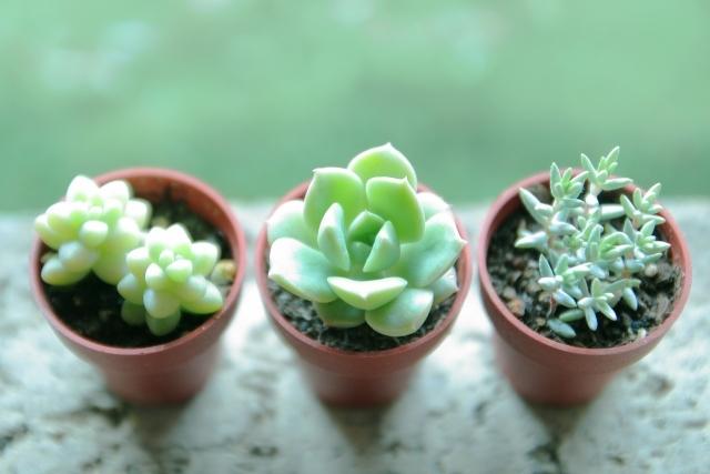 多肉植物の人気種類49選!代表種やおすすめ度が高いものの特徴・飾り方は?