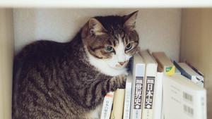 ダイソーのお助け本棚が凄い!文庫本や漫画を簡単に収納できる優れモノ!