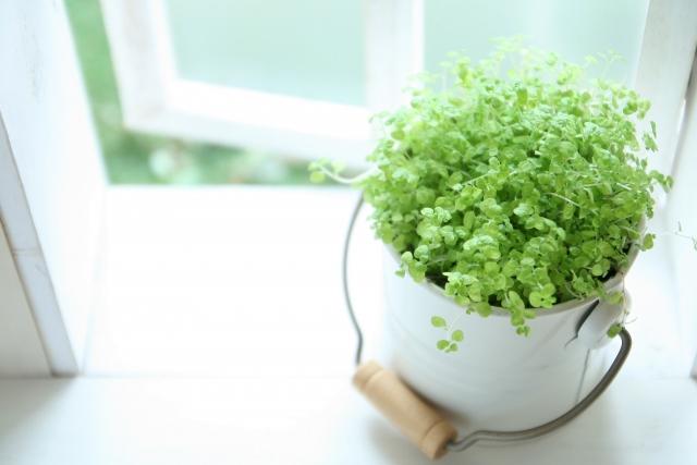 おしゃれな観葉植物ならコレがおすすめ!リビングなど室内での飾り方のコツも!