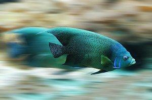 魚に痛覚はあるかないかの最新研究が話題!痛みを感じる能力や場所を解説