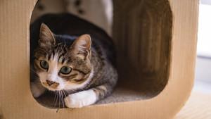 かわいい靴下猫が大集合♡種類・性格や手足が白い理由も紹介!