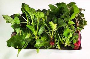 水耕栽培は室内でできる簡単な家庭菜園!初心者におすすめの野菜や作り方を紹介