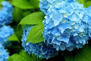 人気のある青い花27種類と花言葉を紹介!おすすめの理由や特徴もチェック
