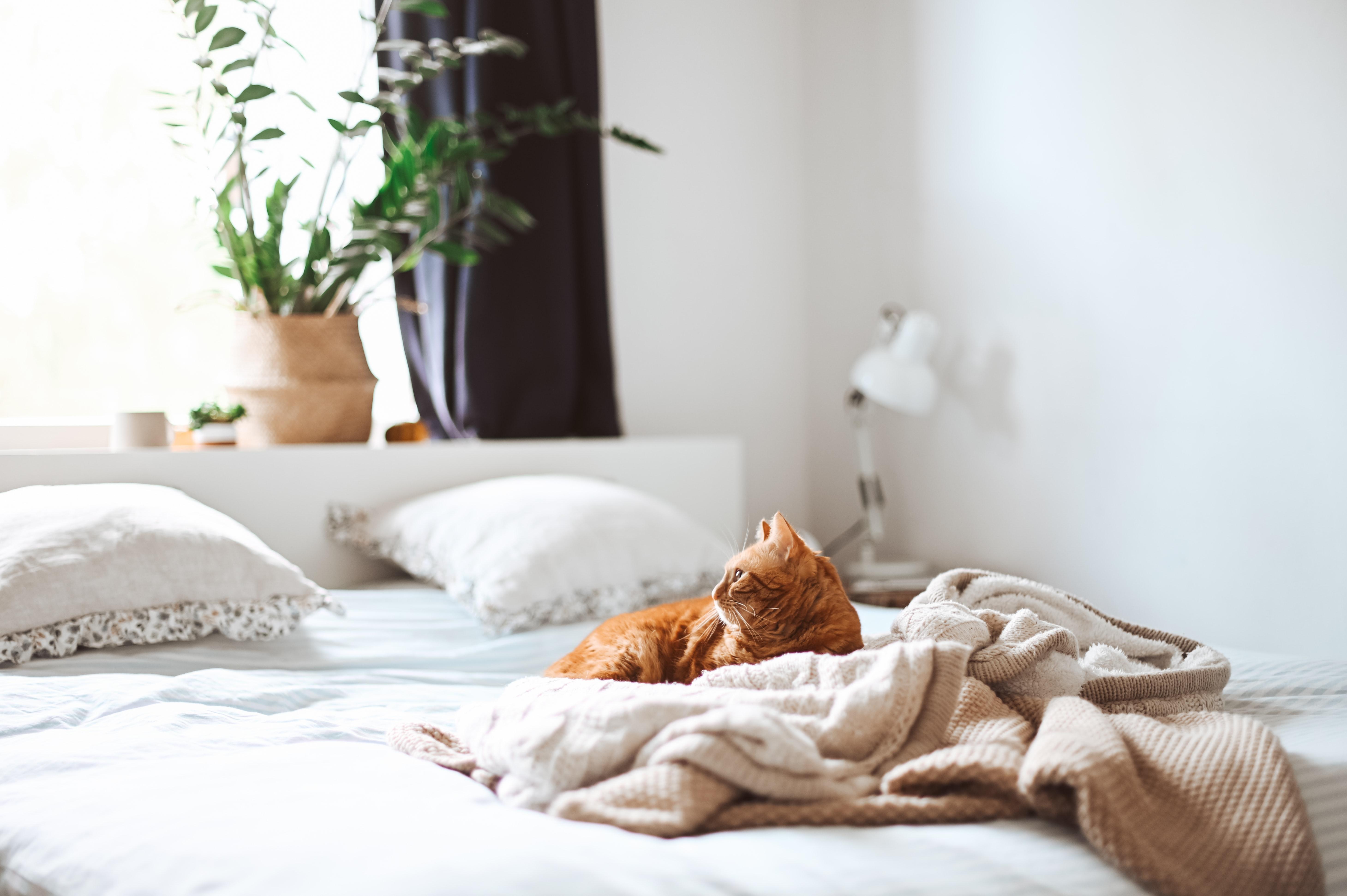 ベッドをDIYで手作りしよう!簡単に安く作れる自作アイデアをまとめて紹介!