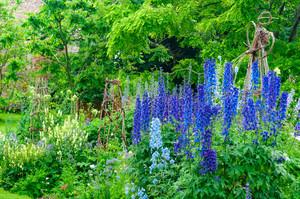 庭作り初心者の人におすすめ!おしゃれな作り方に欠かせないポイントと実例まとめ