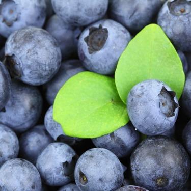 コストコの生・冷凍ブルーベリーがおすすめ!気になる味や栄養をチェック!