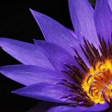 死を意味する怖い花言葉を持つ花19選!由来や贈る時の注意点も!