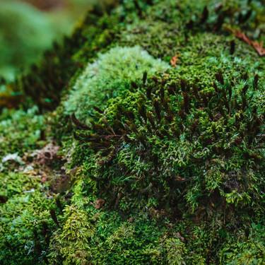 苔の種類は豊富にある!見分け方や育て方の違いなどを詳しく解説!