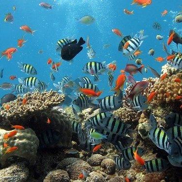 【夢占い】魚の夢の意味39選!大きい・大量・釣るなど状況ごとに紹介!
