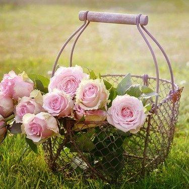 笑顔になれる花言葉を持つ花とは?季節別にプレゼントにピッタリの植物紹介!