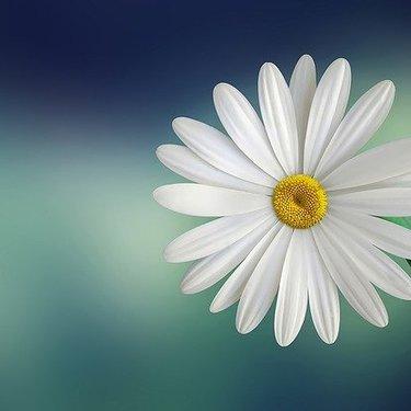 悲しい意味がある花言葉をチェック!恋や別れの切ない気持ちになる花とは?