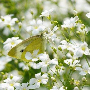 かすみ草の花言葉や由来をご紹介!白・ピンクなど色別の意味も解説!