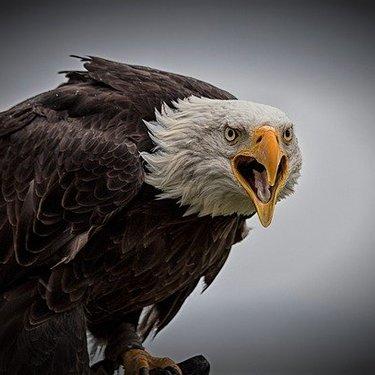鷹と鷲の違いは?大きさなど見分け方のポイントを徹底リサーチ!