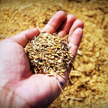 玄米ダイエットの方法・効果を詳しく解説!おすすめレシピやメニューも!