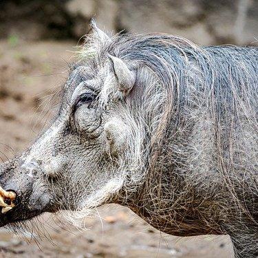 「猪突猛進」の意味とは?正しい使い方・類語・対義語もまとめて紹介!