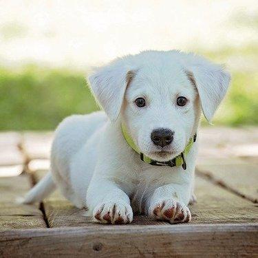 【夢占い】犬の夢の意味39選!たくさん・茶色・なつくなど状況ごとに判断!