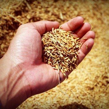 玄米おすすめランキング・トップ17!無農薬など人気の美味しい銘柄はどれ?