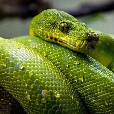 蛇が出てくる夢は何かを暗示している?意味や見る時の心理を詳しくチェック!