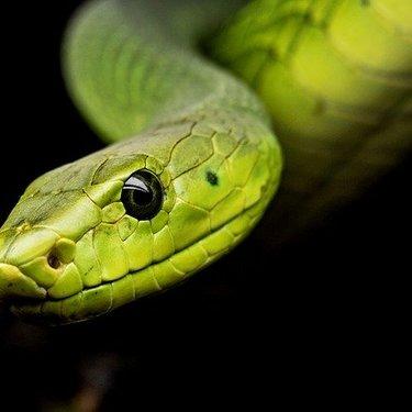 蛇の夢の意味や心理39選!色や大きさ・たくさんなど状況ごとに判断!