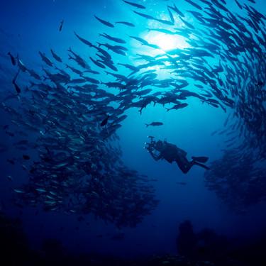 ロウニンアジ(GT)の釣り方や特徴は?値段・獰猛な生態・食べ方まとめ