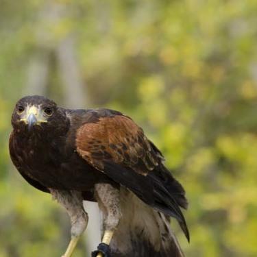 「能ある鷹は爪を隠す」とはどんな意味?正しい使い方や例文・類義語も!