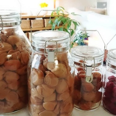 梅干しの保存方法とぴったりな容器を紹介!塩分濃度によって違いがある?