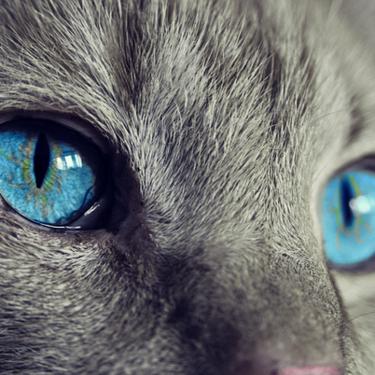 【夢占い】猫に噛まれる夢の意味は?状況別の心理状態をチェック!