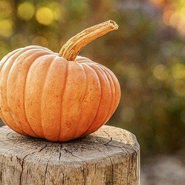 かぼちゃって太るの?ダイエットに効果的な食べ方やカロリーをチェック!