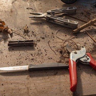 梅の木の剪定時期・方法まとめ!必要な道具や初心者が注意すべき点は?