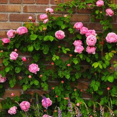 レンガの花壇をDIY!簡単でおしゃれな作り方や積み方のポイントを解説!
