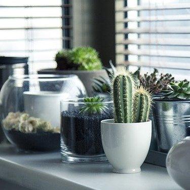 100均ダイソー・セリアの植木鉢がおしゃれ!豊富なサイズ・種類を紹介!