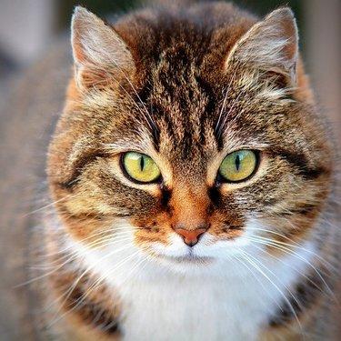 猫にハッカ油は悪影響があるって本当?危険と言われる理由や症状をチェック!