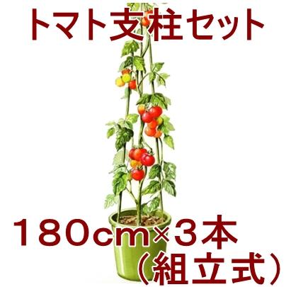 ミニ トマト 支柱 の 立て 方