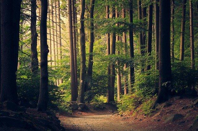 見 見 て 木 意味 を 森 を ず 木を見て森を見ずの相続対策にならないために