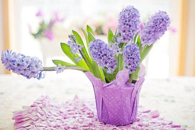 「ヒヤシンス」の花言葉とは?意味や誕生花を解説!