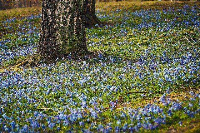 「ブルースター」の花言葉とは?意味や誕生花を解説!