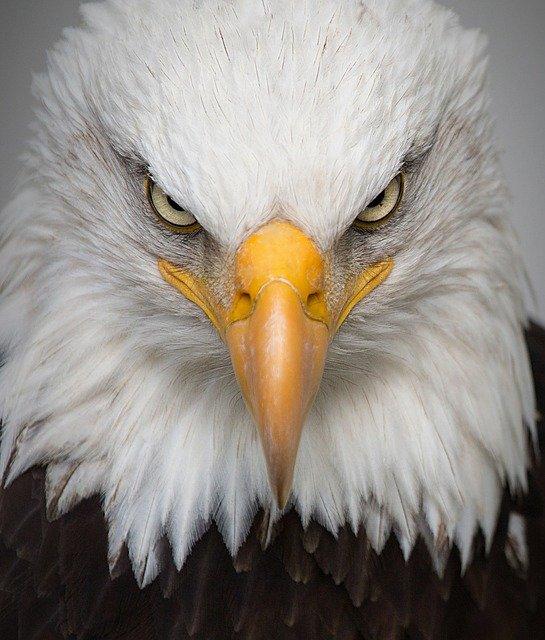 「鳥目」の意味とは?意味や使い方を解説!