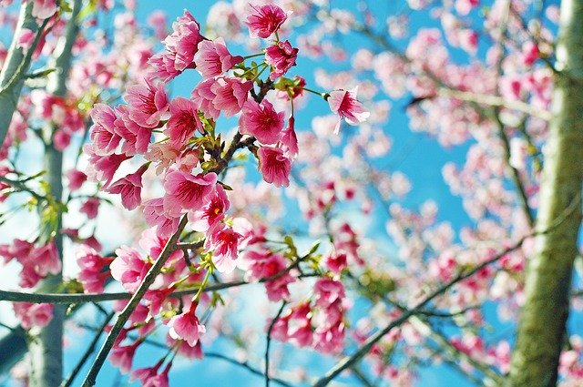 「春風駘蕩」の意味とは?意味や使い方を解説!