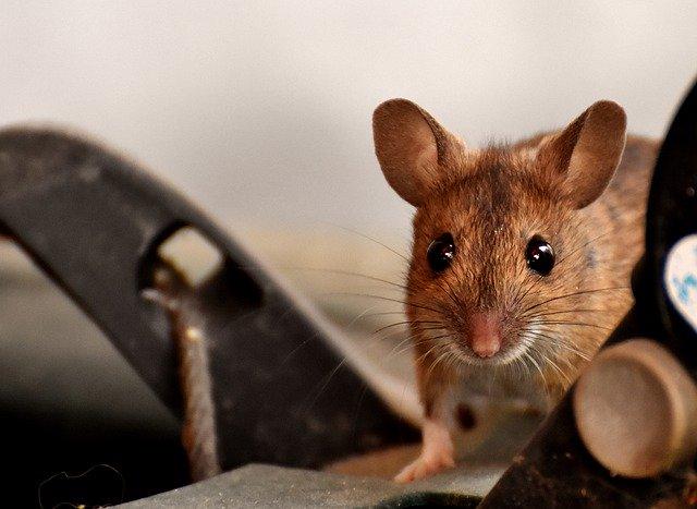 「窮鼠猫を嚙む」の意味とは?意味や使い方を解説!