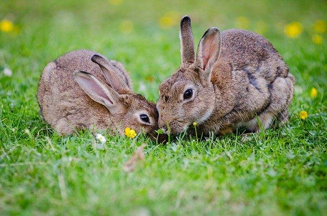 「二兎を追う者は一兎をも得ず」の意味とは?意味や使い方を解説!