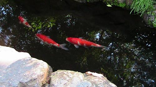 「魚心あれば水心」の意味とは?意味や使い方を解説!
