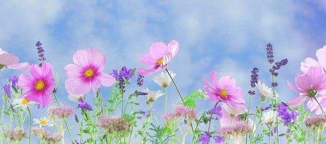 「言わぬが花」の意味とは?意味や使い方を解説!
