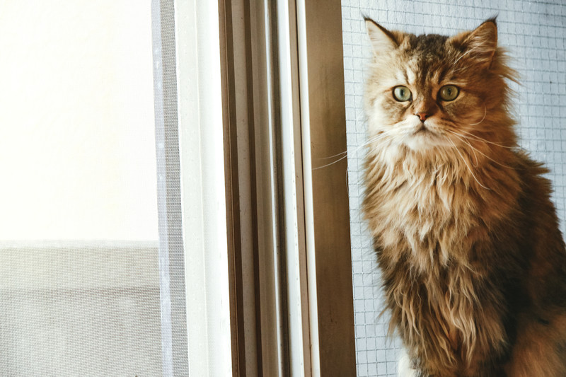 「猫も杓子も」の意味とは?意味や使い方を解説!