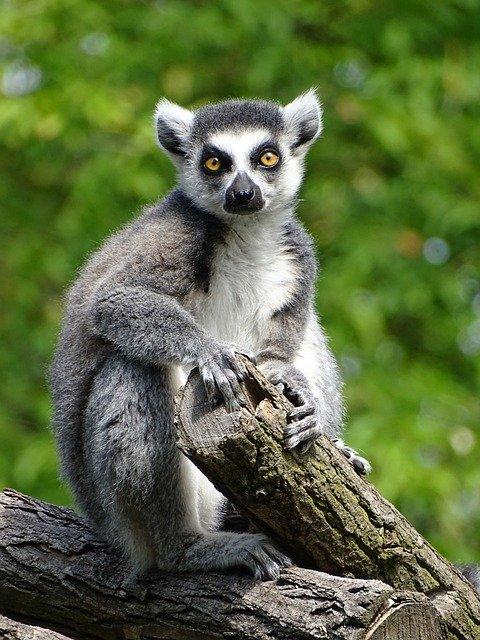 「猿も木から落ちる」の意味とは?意味や使い方を解説!