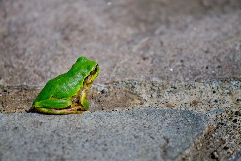 「井の中の蛙大海を知らず」の意味とは?意味や使い方を解説!
