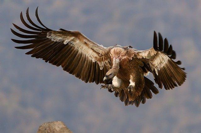 「能ある鷹は爪を隠す」の意味とは?意味や使い方を解説!