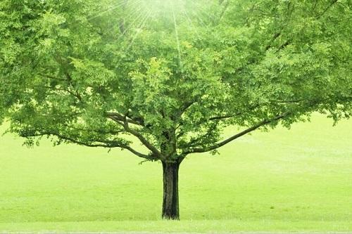 寄ら ば 大樹 の かげ
