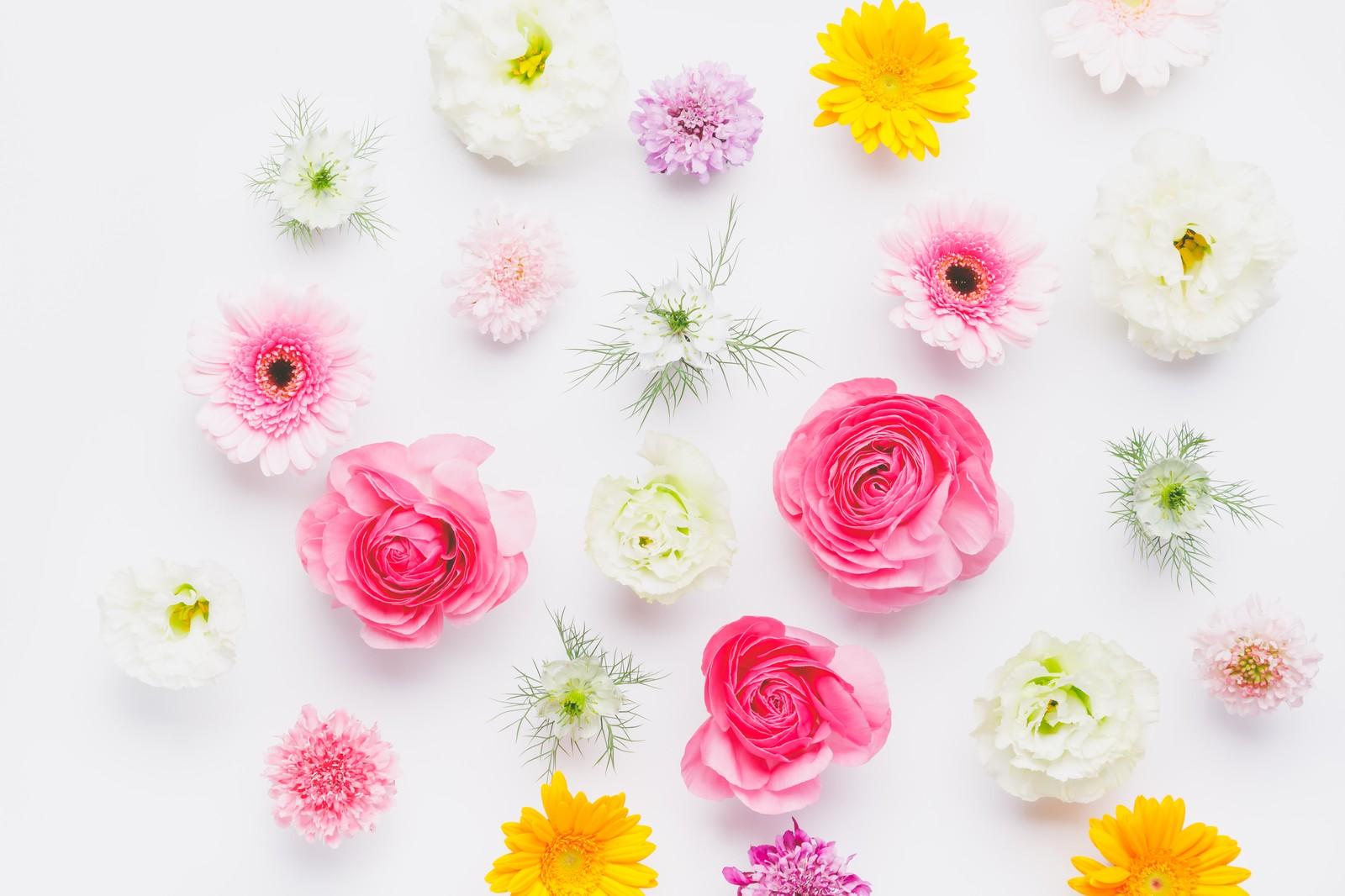 美輪明宏の待ち受け画像 効果は ピンクは恋愛運アップ 金運や仕事運