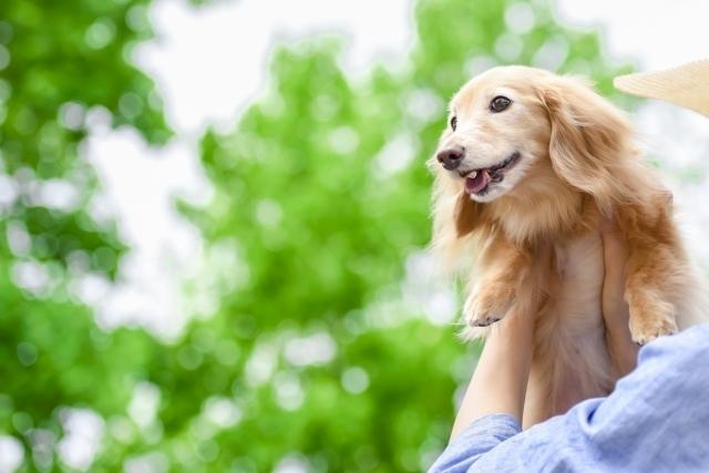 犬を抱っこする人