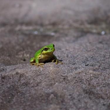 カエルの餌で虫以外の食べ物は何を与えたらいいの?